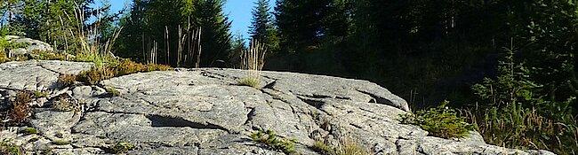 Amberg Gletscherschliff. Foto: Werner Schwarz